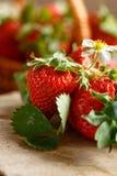 Φρέσκες φράουλες συγκομιδών στον αγροτικό πίνακα Στοκ φωτογραφία με δικαίωμα ελεύθερης χρήσης