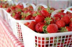 Φρέσκες φράουλες Στοκ εικόνες με δικαίωμα ελεύθερης χρήσης