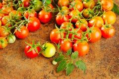 φρέσκες ώριμες ντομάτες Στοκ Εικόνες