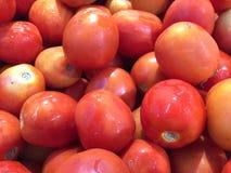 φρέσκες ώριμες ντομάτες Στοκ Φωτογραφίες