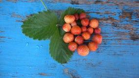 Φρέσκες, ώριμες, juicy φράουλες Κόκκινη φράουλα HD απόθεμα βίντεο