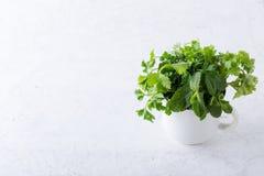 Φρέσκες homegrown οργανικές μαγειρικές και αρωματικές εγκαταστάσεις χορταριών στοκ εικόνες