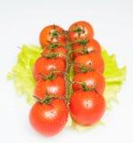 φρέσκες juicy ντομάτες Στοκ εικόνα με δικαίωμα ελεύθερης χρήσης