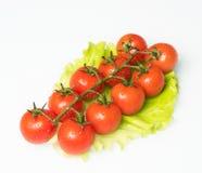 φρέσκες juicy ντομάτες Στοκ φωτογραφία με δικαίωμα ελεύθερης χρήσης