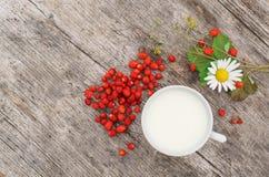 Φρέσκια άγρια δασική φράουλα με το γάλα Στοκ φωτογραφία με δικαίωμα ελεύθερης χρήσης