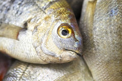 φρέσκια αγορά Τουρκία ψαρ Στοκ φωτογραφία με δικαίωμα ελεύθερης χρήσης