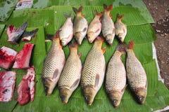 φρέσκια αγορά ψαριών Στοκ Εικόνα
