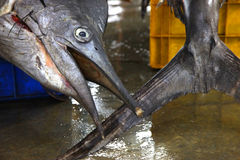 φρέσκια αγορά ψαριών Στοκ φωτογραφία με δικαίωμα ελεύθερης χρήσης