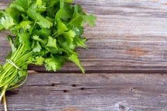 Φρέσκια ανθοδέσμη κορίανδρου ή cilantro στοκ εικόνα με δικαίωμα ελεύθερης χρήσης