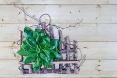 Φρέσκια ανθοδέσμη βασιλικού στο αγροτικό υπόβαθρο Στοκ Εικόνα