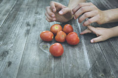 Φρέσκια βιο ντομάτα συγκομιδών παιδιών Στοκ φωτογραφία με δικαίωμα ελεύθερης χρήσης