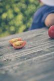 Φρέσκια βιο ντομάτα συγκομιδών παιδιών Στοκ εικόνα με δικαίωμα ελεύθερης χρήσης