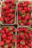 Φρέσκια βιο φράουλα Στοκ Εικόνες