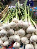 Φρέσκια δέσμη σκόρδου Στοκ εικόνα με δικαίωμα ελεύθερης χρήσης