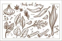 Φρέσκια ευώδης φυσική μονοχρωματική συλλογή χορταριών και καρυκευμάτων διανυσματική απεικόνιση