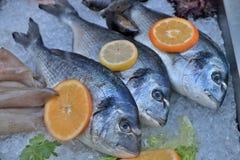 φρέσκια θάλασσα ψαριών Στοκ εικόνες με δικαίωμα ελεύθερης χρήσης