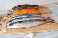 φρέσκια θάλασσα ψαριών Στοκ Εικόνες