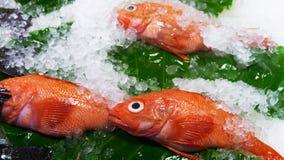 Φρέσκια θέση ψαριών στον άσπρο πάγο στην αγορά Στοκ Εικόνες