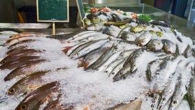 Φρέσκια θέση ψαριών στον άσπρο πάγο στην αγορά Στοκ εικόνα με δικαίωμα ελεύθερης χρήσης