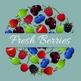 Φρέσκια διανυσματική αφίσα φρούτων μούρων Στοκ Εικόνα