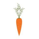 Φρέσκια διανυσματική επίπεδη απεικόνιση καρότων Καρότο για τη σαλάτα βιταμινών Θερινά λαχανικά ελεύθερη απεικόνιση δικαιώματος