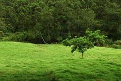 φρέσκια και zesty κιτρινοπράσινη σκιά στοκ φωτογραφίες με δικαίωμα ελεύθερης χρήσης