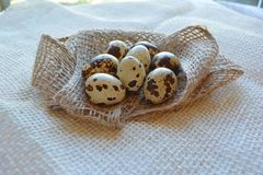 Φρέσκια κινηματογράφηση σε πρώτο πλάνο αυγών ορτυκιών στο άσπρο υπόβαθρο στοκ εικόνα
