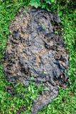 Φρέσκια κοπριά Buffalo ή αγελάδων για το λίπασμα στη φύση Στοκ φωτογραφίες με δικαίωμα ελεύθερης χρήσης