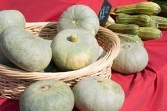Φρέσκια κολοκύνθη της Στέλλα - λαχανικά στην αγορά αγροτών Στοκ εικόνες με δικαίωμα ελεύθερης χρήσης