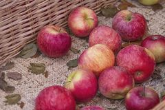 Φρέσκια κόκκινη σύσταση μήλων Φρέσκο μήλο που βρίσκεται στο μετρητή στο καλάθι αχύρου - πορτοκαλιά και κόκκινη σύσταση με τους νω στοκ εικόνες με δικαίωμα ελεύθερης χρήσης