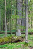 Φρέσκια μικτή δασική στάση στον ήλιο άνοιξης Στοκ Εικόνα