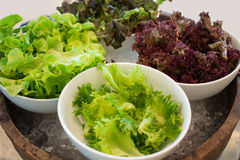 Φρέσκια μικτή πράσινη και κόκκινη σαλάτα σε ένα κύπελλο κοντά επάνω Στοκ Εικόνες