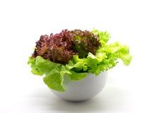 Φρέσκια μικτή σαλάτα σε ένα κύπελλο Στοκ Εικόνα