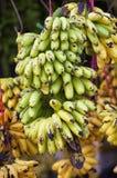 Φρέσκια μπανάνα Στοκ εικόνα με δικαίωμα ελεύθερης χρήσης