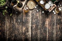 Φρέσκια μπύρα με τους πράσινους λυκίσκους και τη βύνη στοκ εικόνα