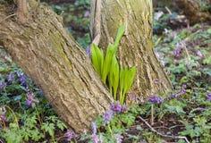 Φρέσκια νέα ανάπτυξη χλόης άνοιξη μεταξύ δύο κορμών δέντρων στοκ εικόνες με δικαίωμα ελεύθερης χρήσης