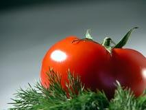 φρέσκια ντομάτα άνηθου Στοκ Φωτογραφία