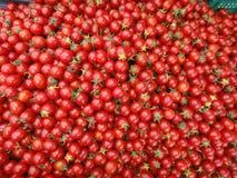 Φρέσκια ντομάτα για τις καλές υγείες στοκ εικόνα με δικαίωμα ελεύθερης χρήσης