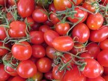 φρέσκια ντομάτα κερασιών Στοκ Εικόνες
