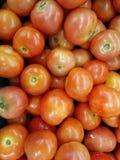 φρέσκια ντομάτα Στοκ Εικόνες