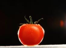 Φρέσκια ντομάτα στοκ φωτογραφία με δικαίωμα ελεύθερης χρήσης