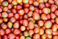 Φρέσκια ντομάτα Στοκ Φωτογραφίες
