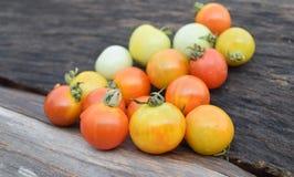 φρέσκια ντομάτα Στοκ Φωτογραφία
