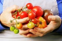 Φρέσκια οργανική κόκκινη, κίτρινη, πορτοκαλιά και πράσινη ντομάτα Ζωηρόχρωμες οργανικές ντομάτες στα χέρια αγροτών Στοκ εικόνα με δικαίωμα ελεύθερης χρήσης