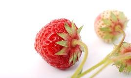 φρέσκια οργανική φράουλα Στοκ φωτογραφίες με δικαίωμα ελεύθερης χρήσης