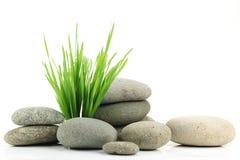 φρέσκια πέτρα χλόης zen Στοκ Εικόνες