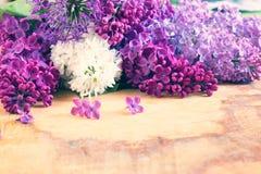 Φρέσκια πασχαλιά Στοκ εικόνα με δικαίωμα ελεύθερης χρήσης