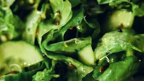Φρέσκια περιστρεφόμενη πράσινη σαλάτα απόθεμα βίντεο