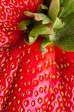 φρέσκια πλήρης μακρο κόκκ&iot Στοκ εικόνα με δικαίωμα ελεύθερης χρήσης