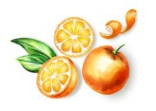 Φρέσκια πορτοκαλιά σύνθεση άποψης φρούτων τοπ Συρμένη χέρι απεικόνιση Watercolor, που απομονώνεται στο άσπρο υπόβαθρο ελεύθερη απεικόνιση δικαιώματος